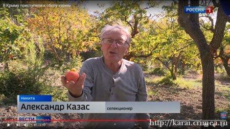 Казас Александр Наумович